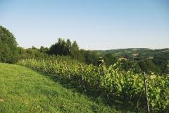 3.-Winnica-Notabene