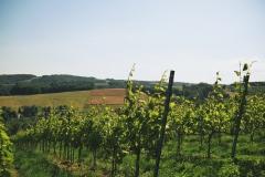 4.-Winnica-Notabene